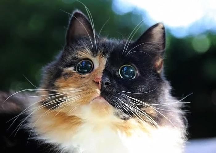 החתולה העיוורת הזאת, נמצאה ברחוב, הביטו בעינייה, יש מישהו המסוגל שלא לאמץ אותה?