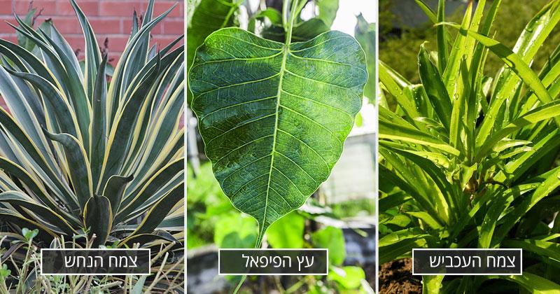 3 צמחים שיטהרו את הבית שלכם מרעל הפורמלדהיד