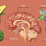 9 המזונות האלה מגבירים את זרימת הדם למוח