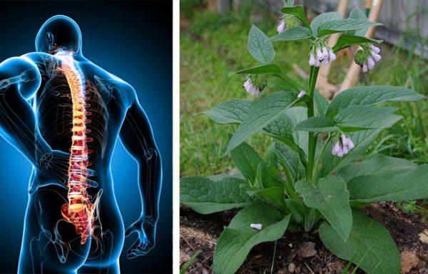 הצמח הזה ישים סוף לכאבי הגב התחתון שלכם