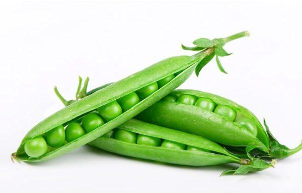אפונה ירוקה – יתרונות בריאותיים