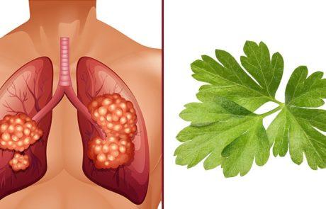 על פי מחקר – הצמח הזה מחסל את סרטן הריאות