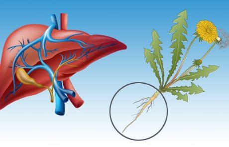 כך תנקו את הרעלים מכל הגוף ותחזקו את מערכת החיסון שלכם