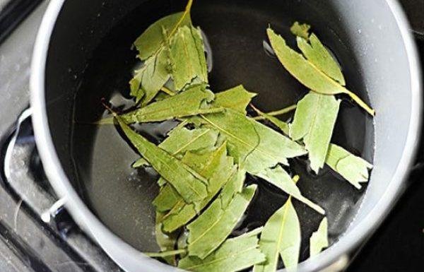 תרופה שמרפאה מעל ל-50 מחלות – הצמח שהורג ברונכיטיס, זיהומי סינוסים, דלקות גרון, חום ומנקה את הגוף מרעלים.