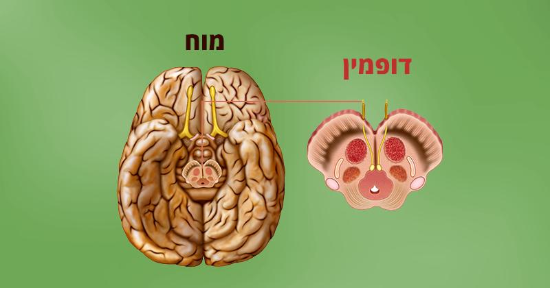 10 דרכים טבעיות להגברת רמת הדופמין במוח