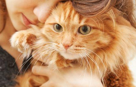 מחקר חדש מאוניברסיטת מינסוטה גילה מידע מדהים על חתול