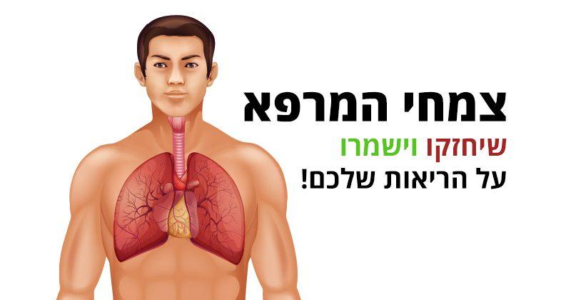 ריאות חזקות ובריאות בעזרת צמחי מרפא ומזונות טבעיים