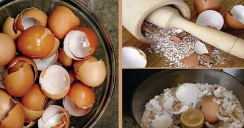אחרי שתקראו את זה אתם לעולם לא תזרקו את קליפות הביצים