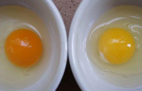 כיצד לדעת אם הביצים יצאו מתרנגולת חולה