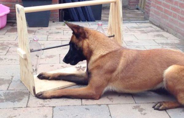 צעצוע קל להכנה בבית שיעשה את הכלב שלכם מאושר