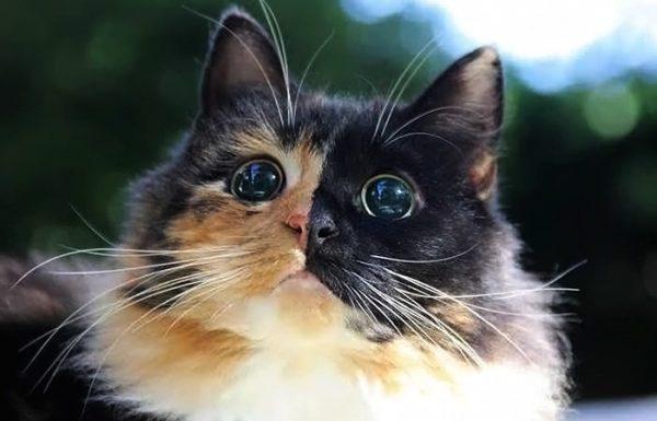 חתול עיוור נמצא ברחוב, הביטו בעיניו, יש מישהו המסוגל שלא לאמץ אותו?
