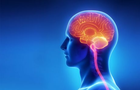 מה באמת האלכוהול עושה למוח שלכם